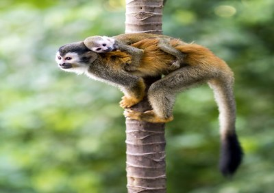 Fauna in Costa Rica's  Rainforest in Eco-friendly Premier Development in the Central Pacific with Luxury Houses for sale