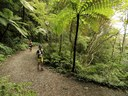 Rainforest trails in Costa Rica's Premier Development in the Central Pacific with Luxury Houses for sale