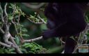 Daily Monkey Visits at Riviera Residences - Riverside Ocean Community for Sale