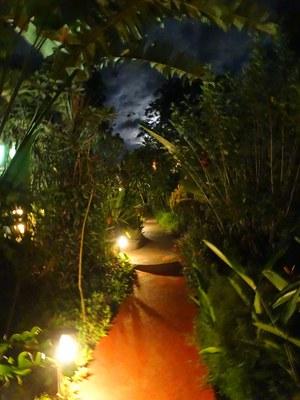 Garden - by night.jpg