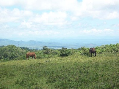 View to the Nicoya