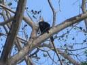 Monkeys love it too!