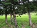 árboles en entrada