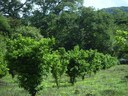 Finca Carmen Sánchez: Countryside, Mountain and Riverfront Agricultural Land For Sale in Costa Rica
