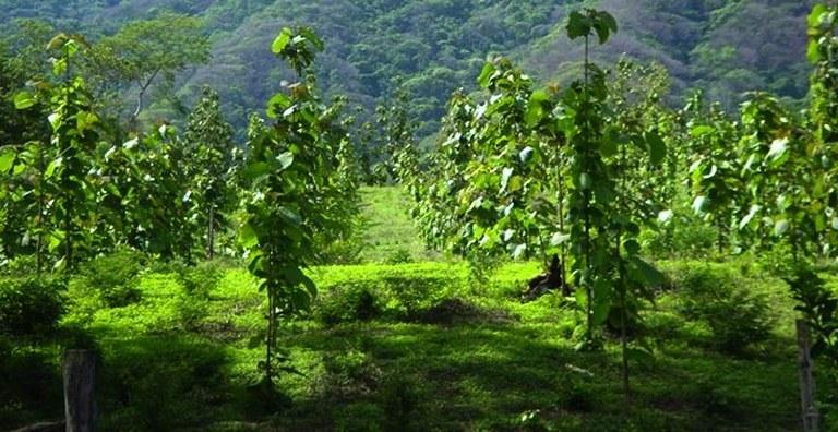 Finca carmen s nchez income producing river front teak citrus farm lots acreage for sale - Fincas sanchez ...