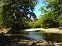 Income Producing River-Front Teak & Citrus Farm for sale in Nicoya, Costa Rica