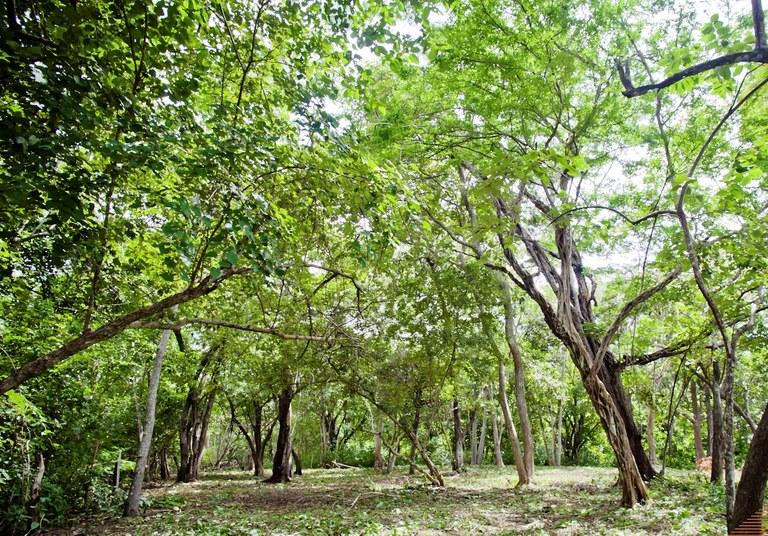 Lote Pura Jungla: Bordering the nacional park