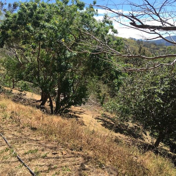 Terreno en atenas costa rica tipos de propiedades for Tipos de terreno