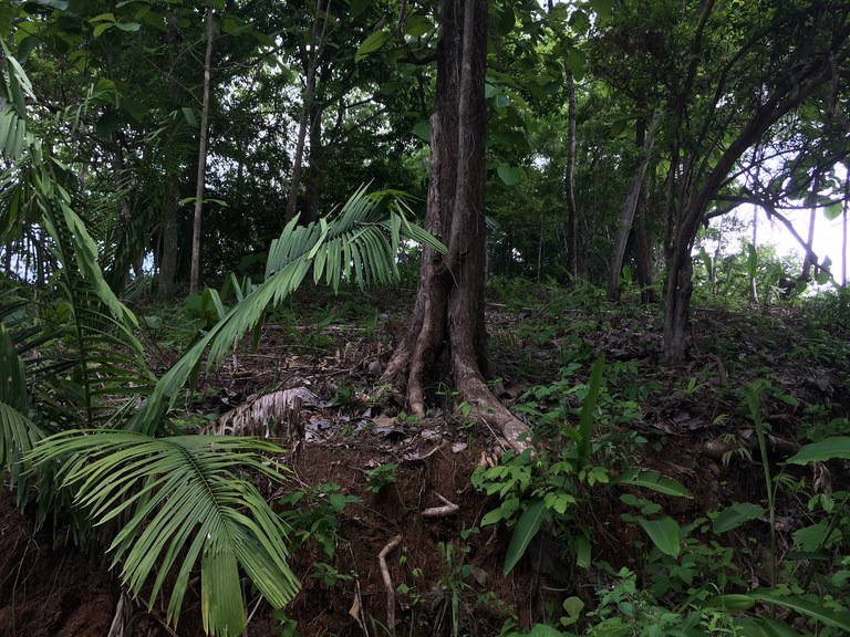 Lote Jungla: Mountain and Near the Coast Home Construction Site For Sale in Playa Sámara