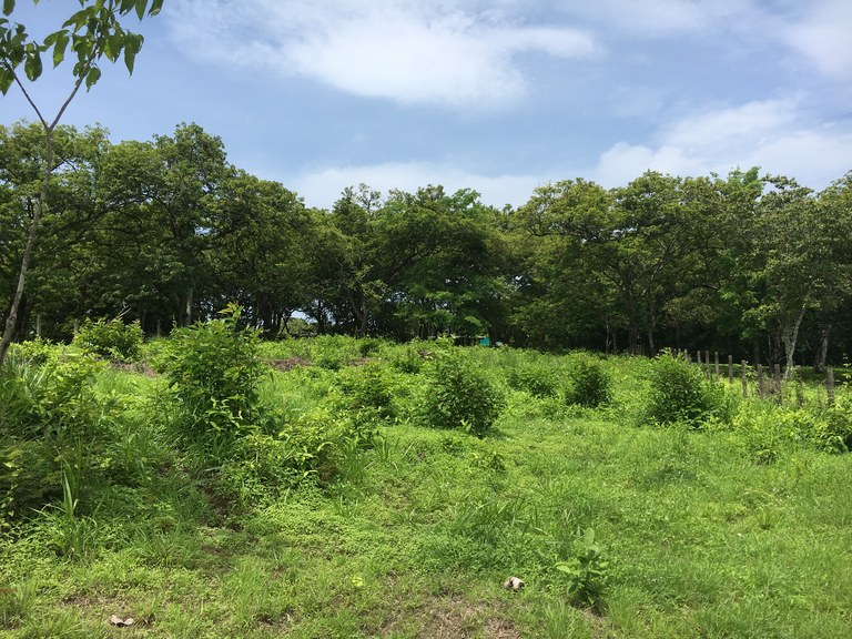 Carrillo Lots: Near the Coast Home Construction Site For Sale in Playa Carrillo