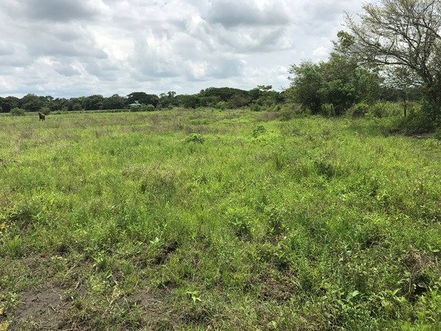 Property close to Liberia and Discovery Park