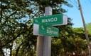 Calle Mango