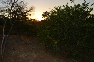 Sunset Over Trees - Oceanview Lot in Gated Community Close To Beach