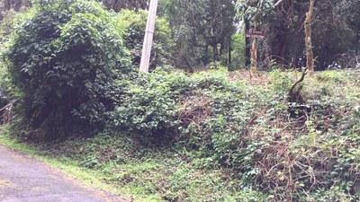 Terreno en San José de la Montaña - 20.jpg