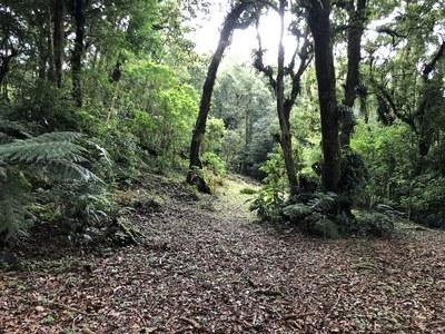 Terreno en San José de la Montaña - 5.jpg
