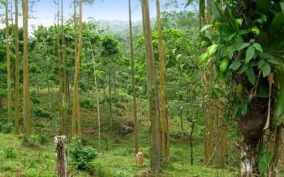 Guanacaste Development Land For Sale