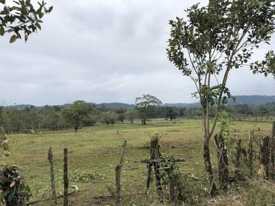 Finca en Rio Hondo, Siquirres - 18.jpg