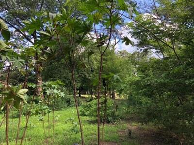 Lot in Guardia, Liberia - LL1900150 (5).jpg