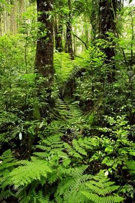 Jungle  (2).jpg