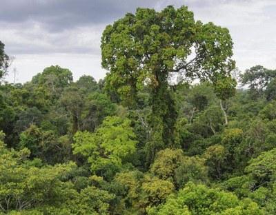 Jungle  (3).jpg
