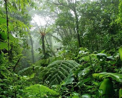 Jungle  (4).jpg