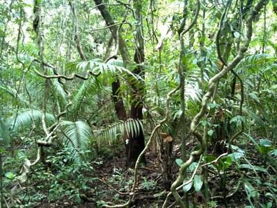 Jungle  (1).jpg