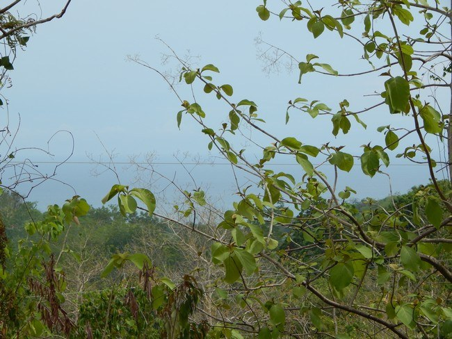 5104 - Cool breezes, great view - this is your lot!:Santo Domingo lot with views and teak trees