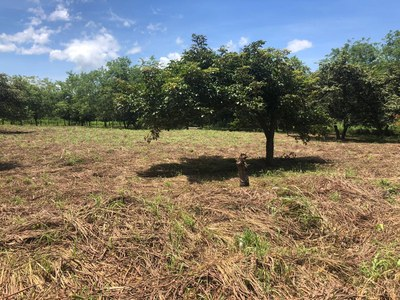 Commercial Property Liberia - LL1900270 (4).jpg