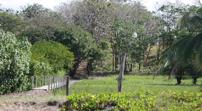 Commercial Property in Junquillal Beach - Santa Cruz