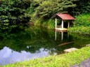 RE/MAX Rico Realty, Lake Arenal Experts                                 One of several swimming ponds, natural spring water