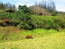 Real Estate, Costa Rica, Lake Arenal, Volcano Arenal view, home and farm for sale