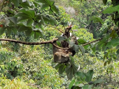 sloth-700.jpg