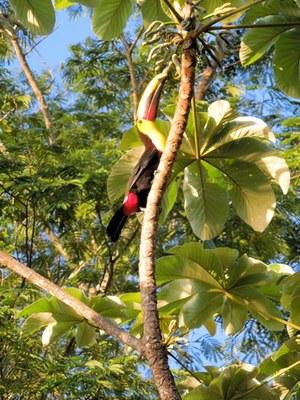 toucan-700.jpg