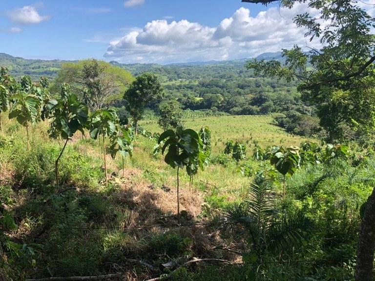 Beautiful teak farm with stable in San Dimas, La Cruz