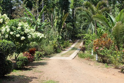 Entry road from the gate at Casa Nené on the Osa Peninsula