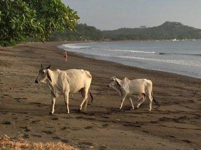 KRAIN Costa Rica Real Estate_Playa Potrero Beach_8.jpg